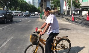 Cyclist takes chicken for a ride during morning rush hour in Thailand