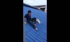 Dog owner rescues clumsy husky who got stuck on roof
