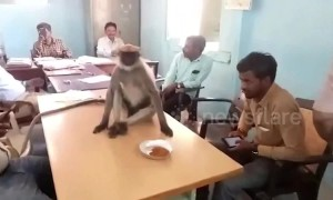 Wild monkey spotted at polling station during elections in India