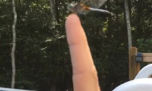 Making Friends with a Dragonfly