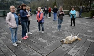 The Dog is the Tourist Attraction