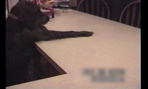 Throwback Clip: Smart Pup Loves his Treats!