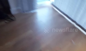 Scaredy-cat is terrified by vacuum cleaner