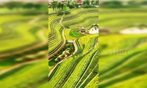 Incredible view of vibrantly coloured terraced fields in Chinese town