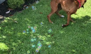 Boxer Bounces for Bubbles