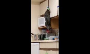 Curiosity feeds the cat! Feline breaks into food cupboard to steal its dinner