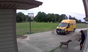 US dogs chase Texas FedEx driver back into his van