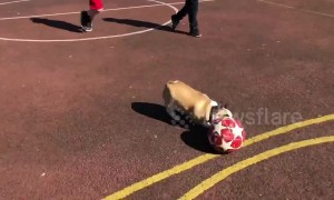 'Lionel Messi of Dogs' runs rings around a group of young football players in Ireland
