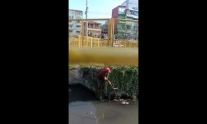 Passerby rescues drowning puppy from a canal in Manilla, Philippines