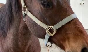 Horse Dons Hilarious Hat