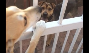 Dog absolutely refuses to leave her best friend behind