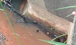 Firefighters Struggle to Rescue Thrashing Anaconda