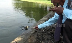 Kind-hearted security guard feeds hungry turtles in pond