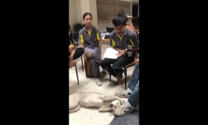 Adorable puppy covers his ears during youth band practice in Thailand