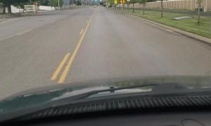 Random Pig Wanders down Street