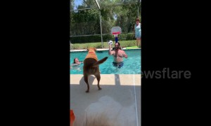Is this the dog Michael Jordan? Pup gets a slam dunk in pool basketball