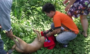 Puppy with mouth taped shut rescued after being dumped on Thai riverbank