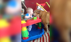 Bulldog and Baby are Buddies