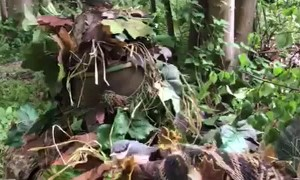 Camo Suit Leads to Unforgettable Nature Experience