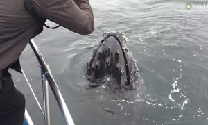 Incredible up-close encounter with Humpback Whale