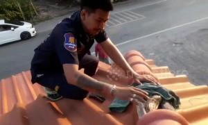 Rescue worker climbs onto roof to rescue 8-foot-long python trapped in between tiles