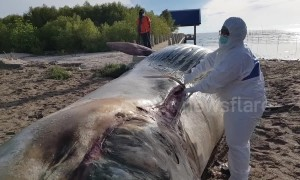 Marine workers investigating after 35ft long dead whale washes up in Thailand