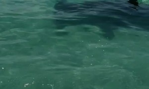 Hammerhead Circles Their Boat
