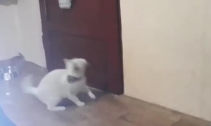 Smart Cat Knows How to Open Doors