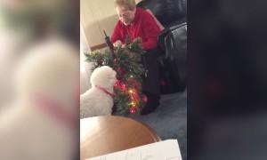 Christmas Light Cheer