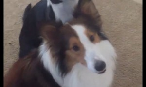 Dog hilariously throws best pal