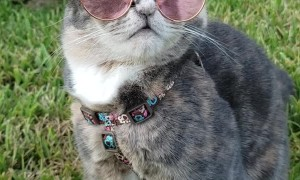 Cat Looking Good in Glasses