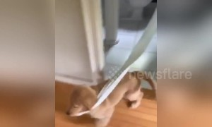 Sneaky puppy runs around US house with stolen toilet roll