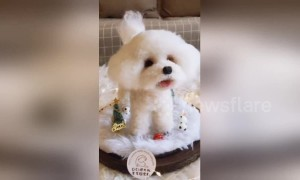 Chinese girl uses wool to make lifelike pet dog for owner
