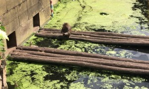 Monkey Gives Unexpected Food Chain Lesson