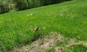 Fearless Fawn Gets Friendly