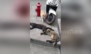 Cat catches her sneaky partner cuddling with another feline