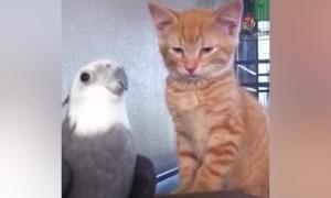 Amazing Pets