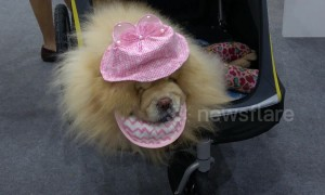 Dressed-to-impress fur babies star at Pet Expo Thailand