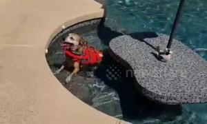 Senior dog who swims until he collapses given life jacket in Arizona