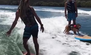 Amazingly talented dog loves to go surfing