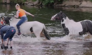 Highlights from the first day of the Appleby Horse Fair 2019