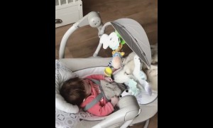 Husky sweetly plays with happy baby