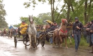 Poor weather causes horse-drawn carts to crash at Appleby Horse Fair