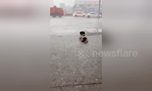 Puppy watches the rain fall to chill out in China's Guangdong