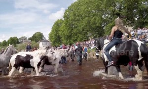 Travellers show off their impressive horses during annual Appleby fair