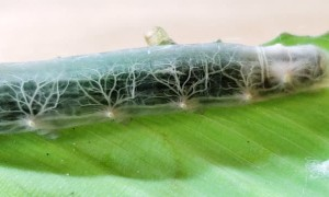 Cool and Clear Caterpillar