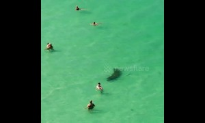Manatee swims past oblivious beachgoers on Florida beach