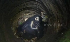Wild bear rescued from 30-foot-deep well after injuring four villagers in eastern India