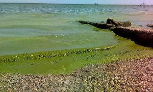 Black Sea Looks Green