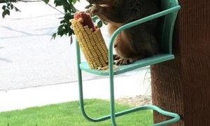 Squirrel Sits for a Snack